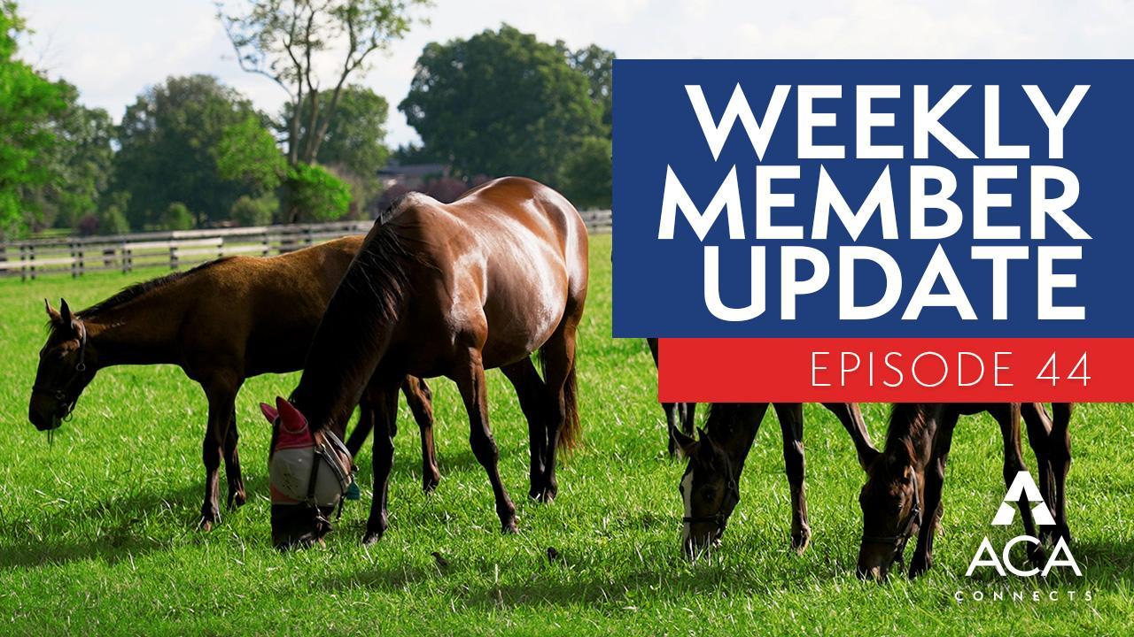 weekly member update – ep44